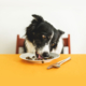 photo of a dog eating food at table
