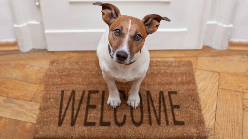 photo of dog standing on welcome mat